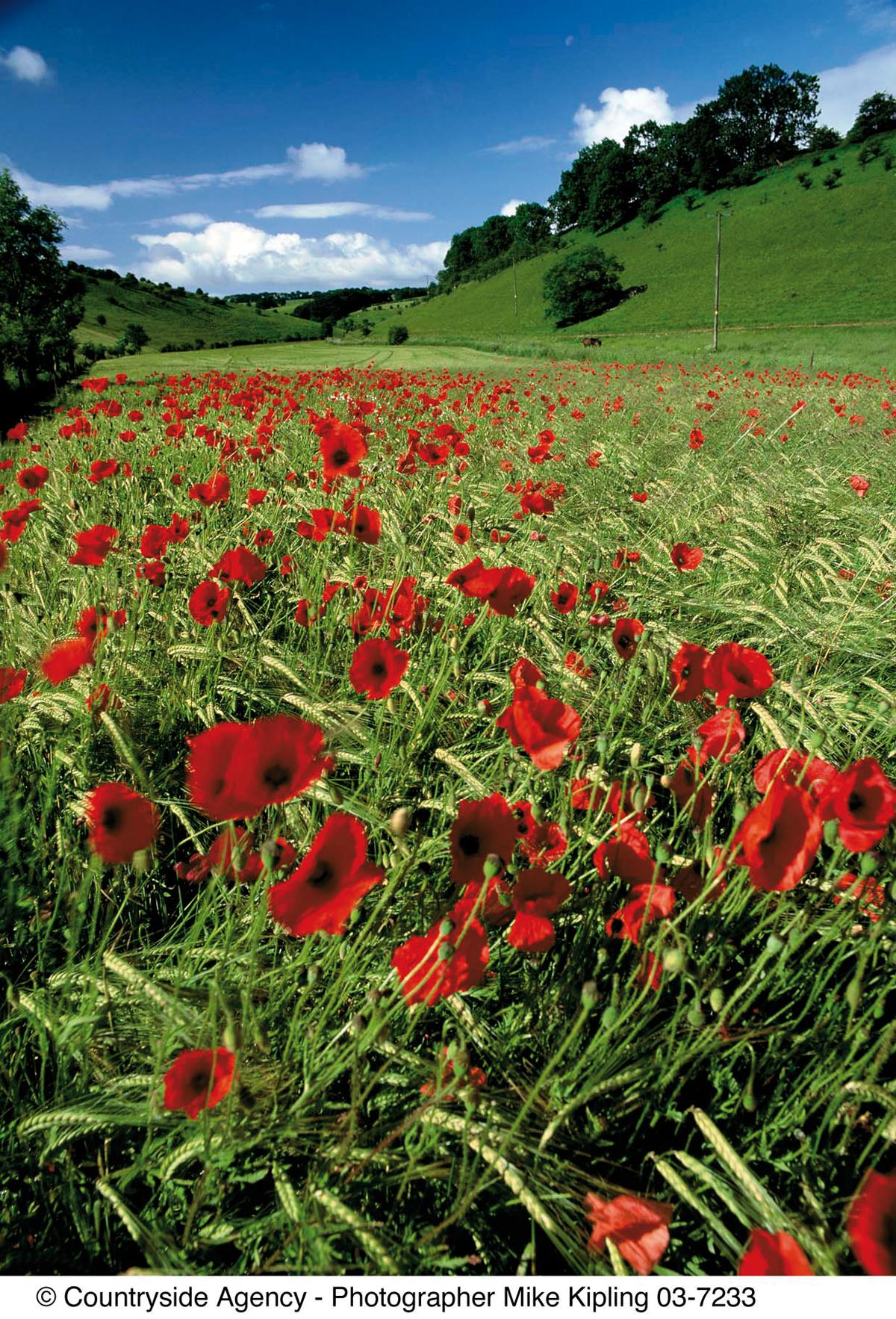 Thixendale © Mike Kipling, Natural England