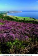 Ravenscar © Mike Kipling, Natural England